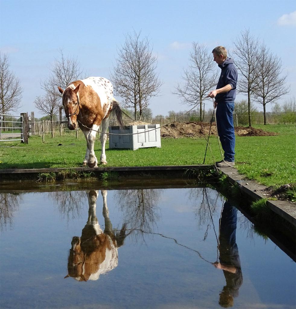 Humphrey Dirks Horsemanship, online