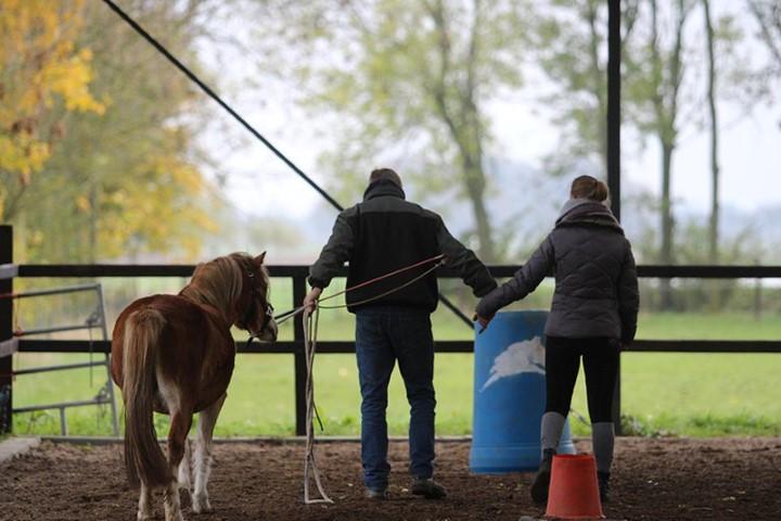 humphrey dirks horsemanship op maat