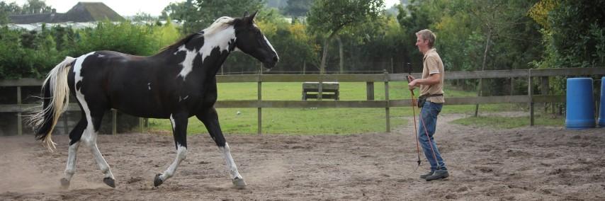 humphrey dirks horsemanship, liberty