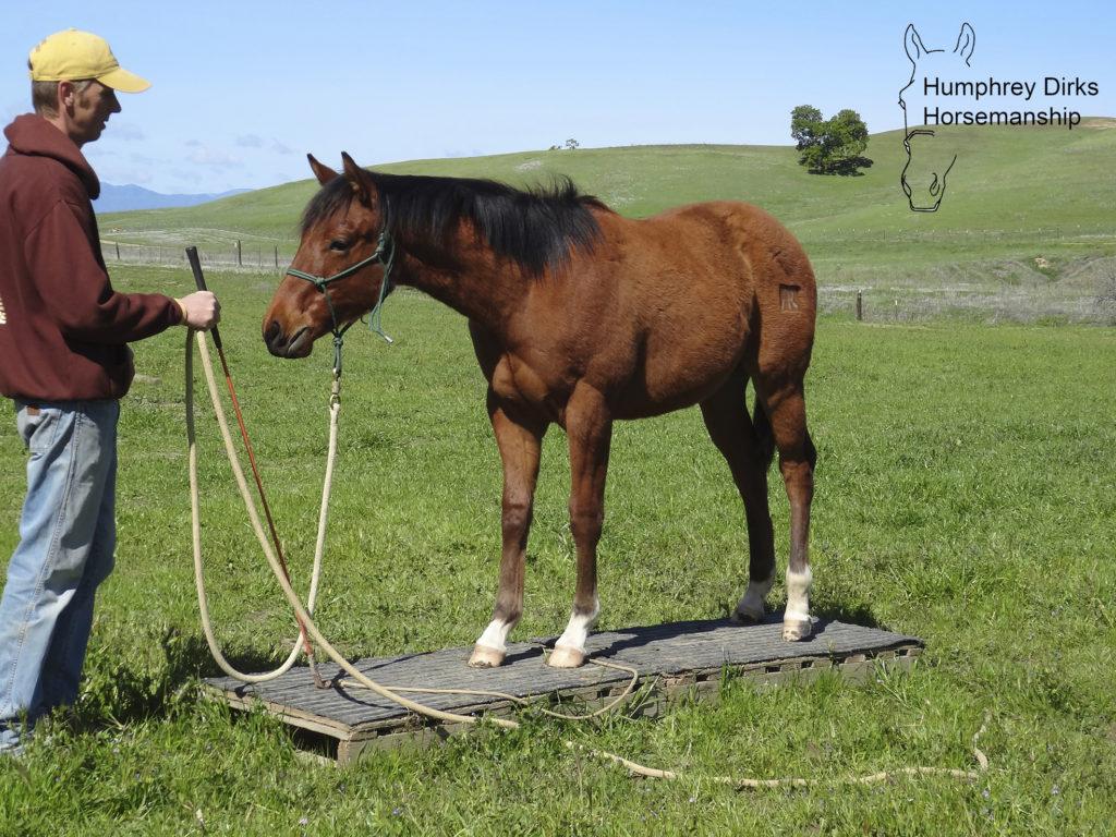 Humphrey Dirks Horsemanship, trailer laden
