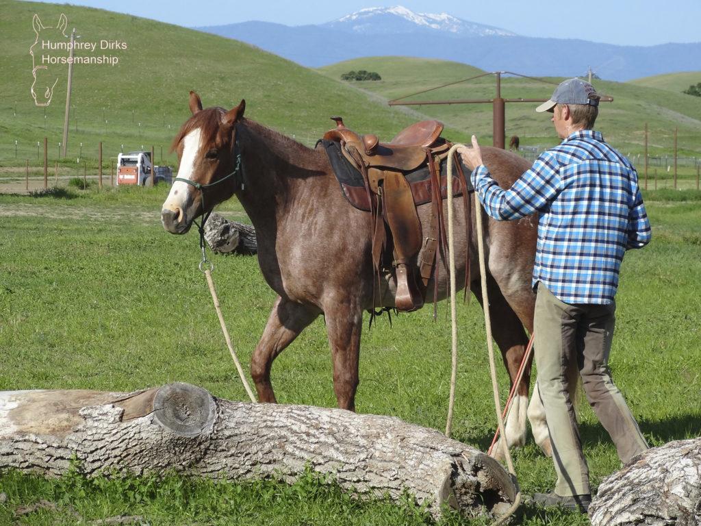Humphrey Dirks Horsemanship, online, sideways game