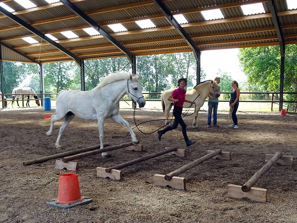 Online tijdens HDH horsemanship op maat weekend
