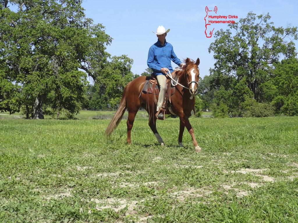Humphrey Dirks Horsemanship